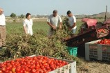 Agriculture in Gozo - An important economic activity