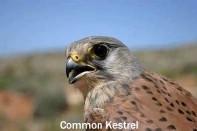 53 international ornithologists to join 'Raptor Camp'