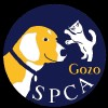 The Gozo SPCA may be forced to close by the end of next year