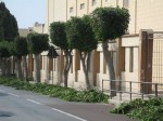 Urgent need for the professional management of trees - FAA