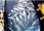 Join retailers Mediterranean bluefin tuna boycott, urges WWF