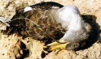 Maltese work to reduce seabird by-catch is warmly received