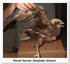 419 shot protected birds reported to BirdLife and the NMNH