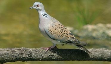 BirdLife welcomes European Court decision