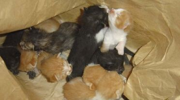 Gozo SPCA makes an urgent appeal to stop the inhumane dumping of puppies and kittens