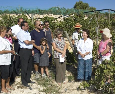 New Gharb vineyard bears first fruits
