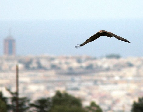 257 offences in two weeks: The CABS Bird Guards Malta operation is extended