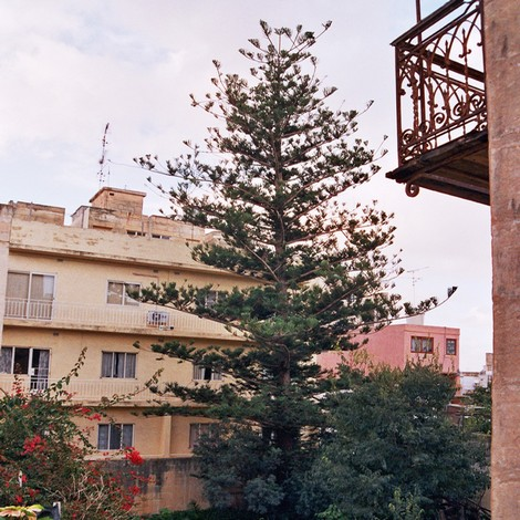 Residents rights and protected tree get reprieve