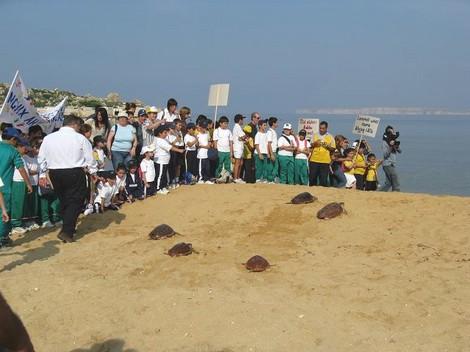 Nine loggerhead turtles released back to sea