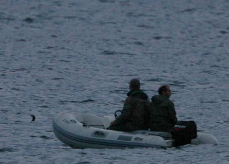 Illegal sea-hunters kill protected Great Cormorant