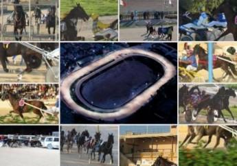 Live horseracing coming to Melita Sports