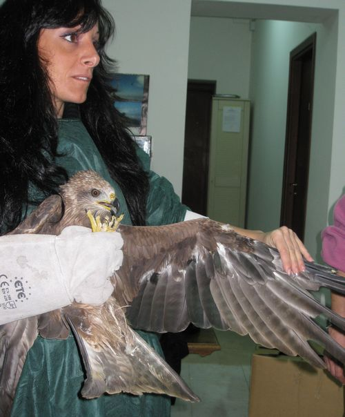 Birds confiscated from a falconry centre in Malta now safe in Sicily