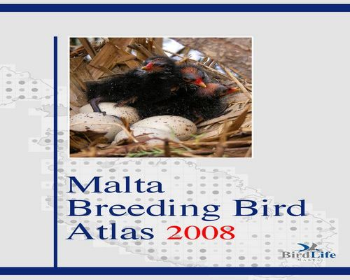 Mixed fortunes for Malta's breeding birds
