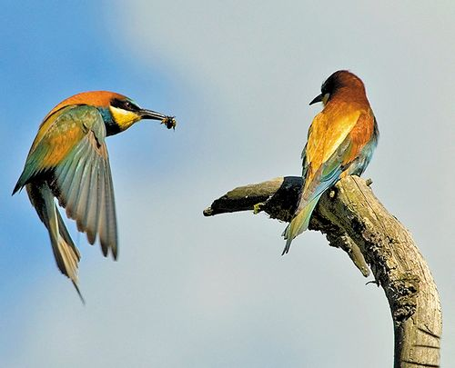 BirdLife launches international campaign to protect migrating birds