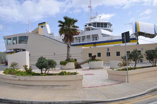 Toppled palm tree at Gozo Ferry Terminal