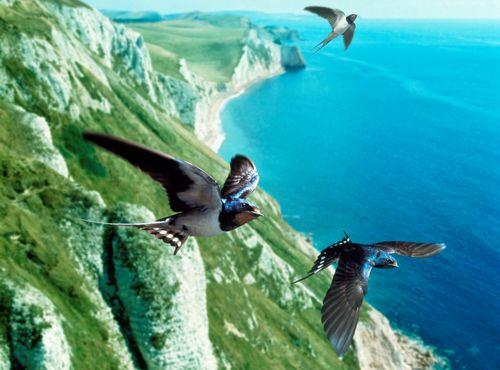 Worldwide praise to EU for protecting birds
