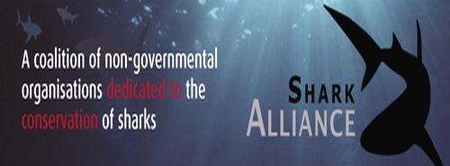 EU Fisheries Ministers React to Shark Plan