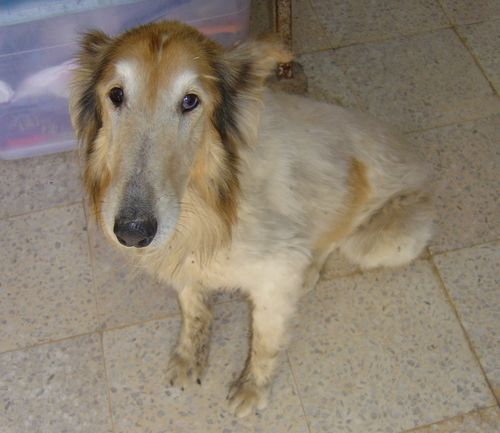 Gozo SPCA appeal for information on stray dog found in Marsalforn