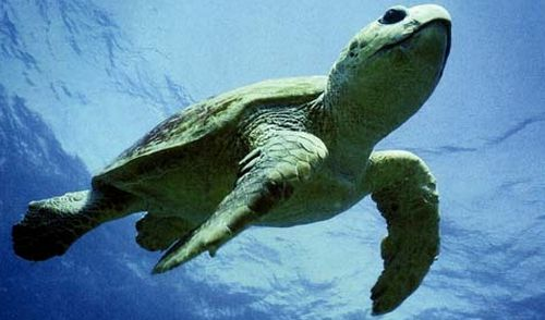Y4TE adopts sea turtle as an endangered species with WWF