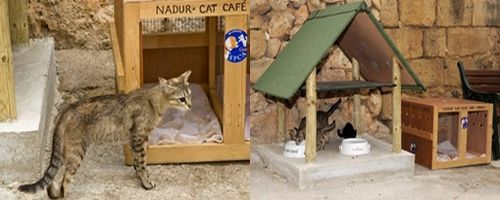 Nadur cat café opens, but Gozo SPCA is in crisis