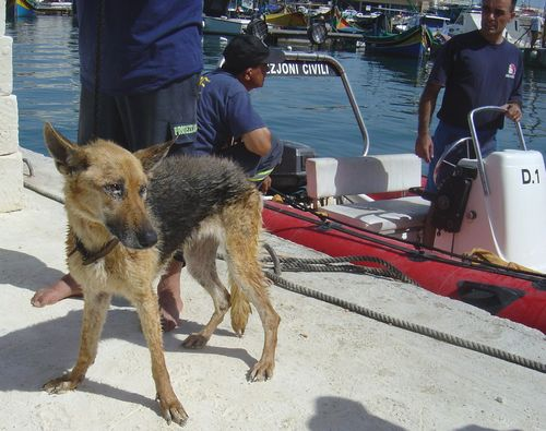 German Shepherd rescued from sea cave