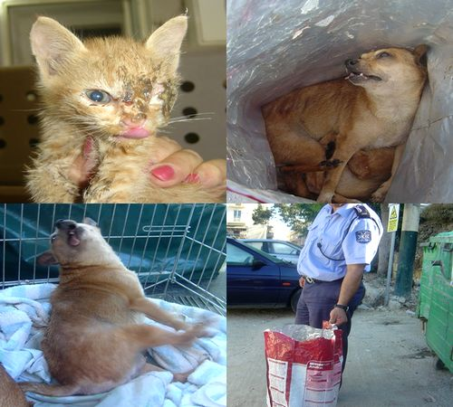 Yet more horrific animal cruelty in Gozo - Gozo SPCA