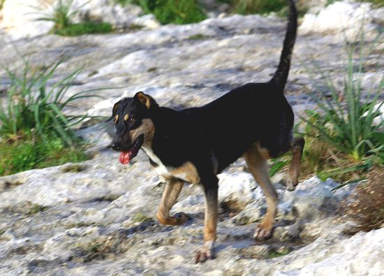 The Gozo SPCA is looking for a loving home for Blazer