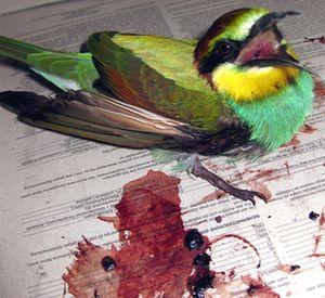 International birdwatchers gather in Malta as Migration kicks in