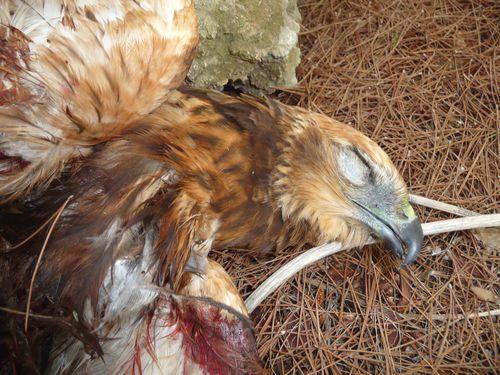 "Bird ""Cemetery"" found in Mizieb - Birdlife Malta"