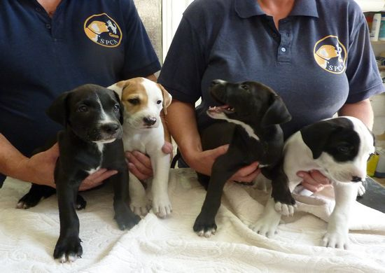 Arduina's 4 puppies are now ready for a new home
