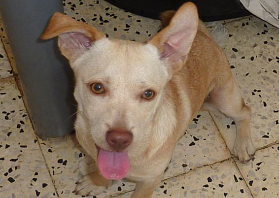 Gozo SPCA seeking a new home for Nutmeg