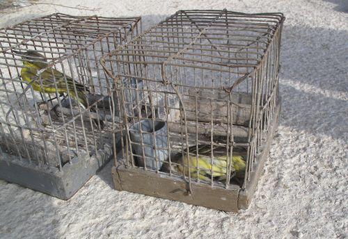 Same illegal trapper caught again - Birdlife Malta