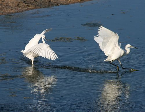 Environmental NGOs to file complaint to the EU