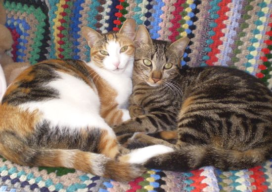 Ex-Gozo SPCA cats Oggy and Honey need a new home