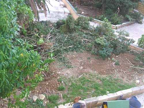 Gozo-SPCA2.jpg