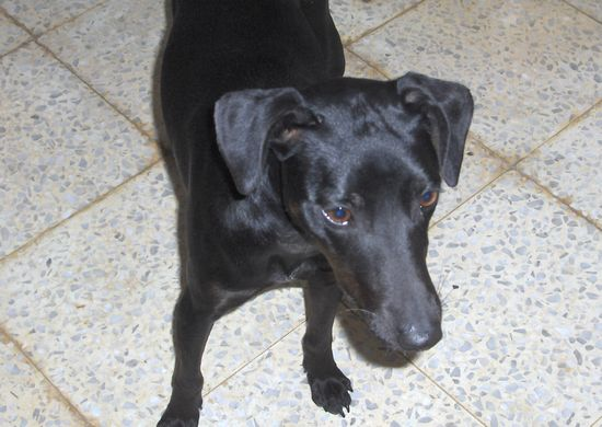 Fenn is a loving young dog who is in need of a home