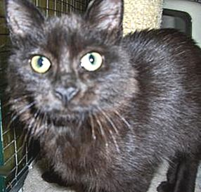 Ettiene is a young kitten hoping to find a loving home