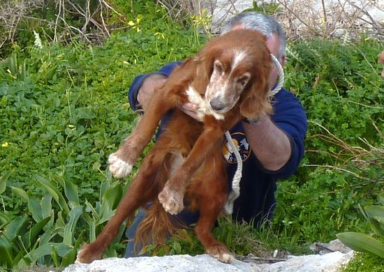 Gozo SPCA rescues starving dog from Wied Il-Ghasri