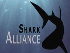 Shark Alliance applauds new proposal for Porbeagle Sharks