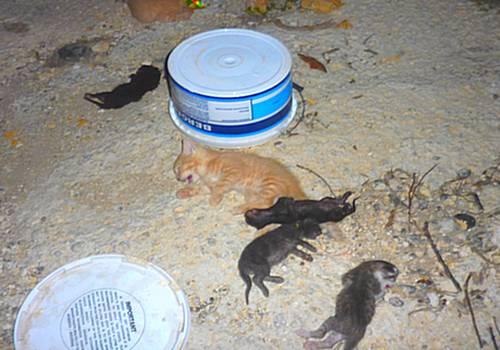 Seven dead Kittens found in Ghajnsielem - Gozo SPCA