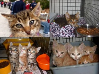 These kittens at the Gozo SPCA are hoping for new home