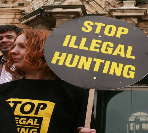 Government decision on spring hunting a farce - BirdLife