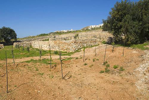 Qala Local Council launches further Adopt a Tree Initiatives