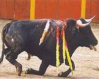 AD applauds the Catalan Parliament for banning bullfights