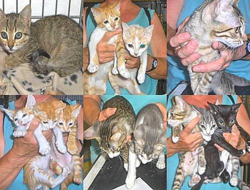 Kittens at the Gozo SPCA who are waiting for loving homes