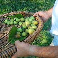 Xaghra Council delegation in Italy for Bari Figs Festival