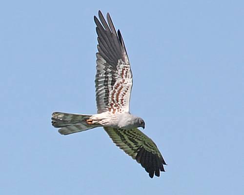 CABS bird guard camp 'Safe Passage' starts September 10th