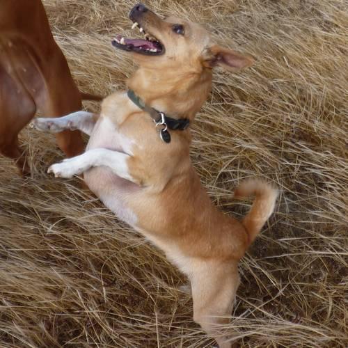 Gozo SPCA faces closure as new premises fail to materialise
