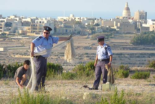 CABS records & reports illegal bird trapping on Gozo & Malta