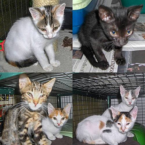 Gozo SPCA's latest addition of kittens awaiting new homes